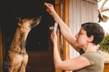 7+1 tipp, hogymajdnemprofik legyeneka kutyafotók, amiketházilag csinász