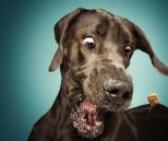 Kutya fotó effektus tippek 7 percben